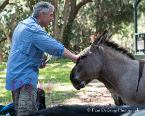 Captain Mike Neal pays attention to the donkeys
